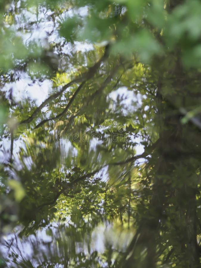 Trees reflecting in a pond royalty free stock photos