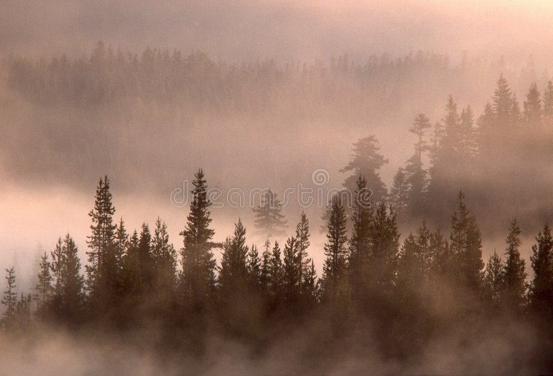 Trees and Lifting Fog stock photography