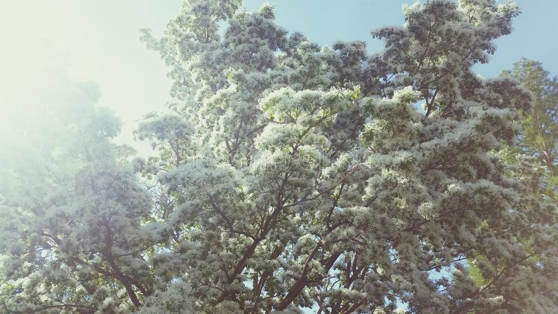 Trees like clouds royalty free stock photos
