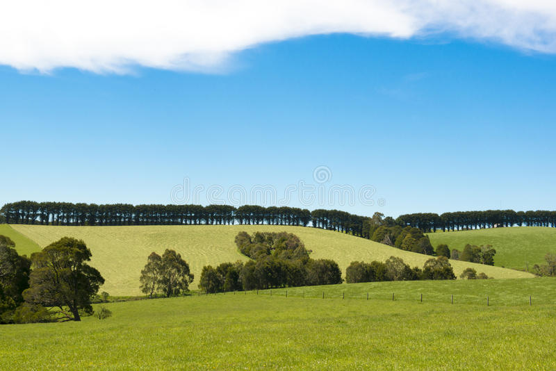 Trees in line over meadows, Southern Australia stock photography