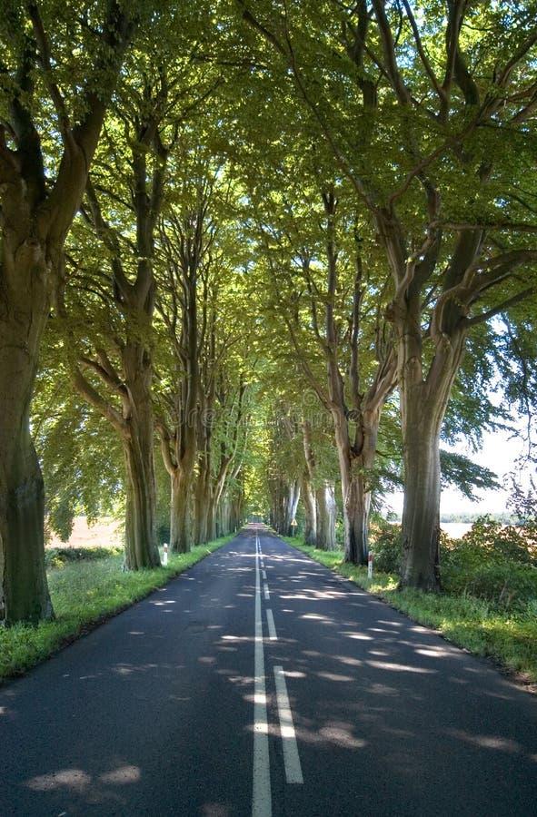 Trees lining straight road