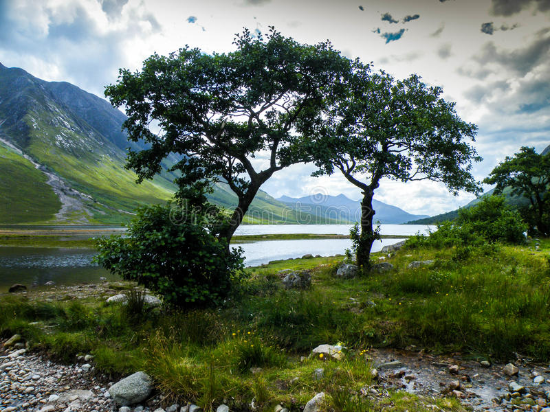 Trees by a loch royalty free stock image