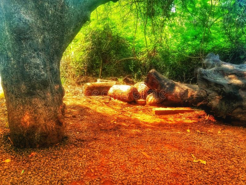 Trees lying cut down on the ground and a standing tree. This location is near Bassein fort in India. It depicts that the trees are cut down or it has fallen down royalty free stock image