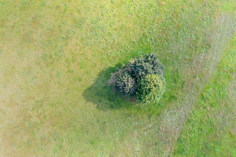 Trees on a meadow from above royalty free stock images