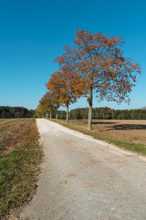 Trees with orange leaves and cycle path, along touristic route Romantic Road, Buchdorf, Germany. Trees and meadow in autumn colors, cycle path, along Romantic stock photography