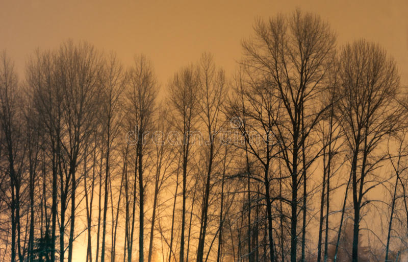 Trees at Midnight. stock image