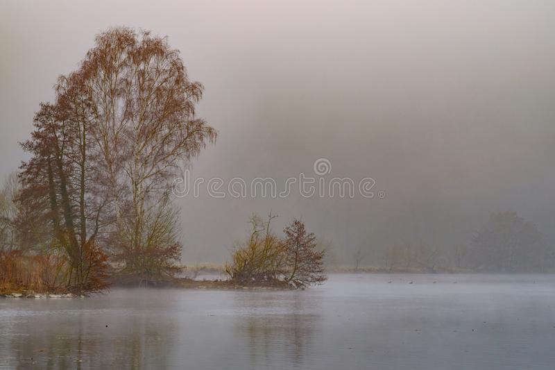 Trees In The Mist Free Public Domain Cc0 Image