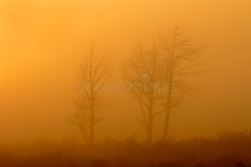 Download Trees in mist stock image. Image of calm, outdoor, foggy - 602157