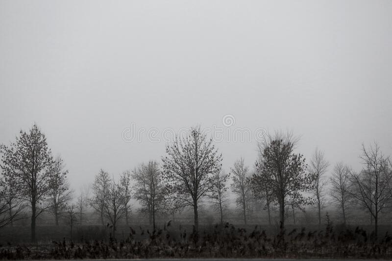 Trees In The Mist stock photos
