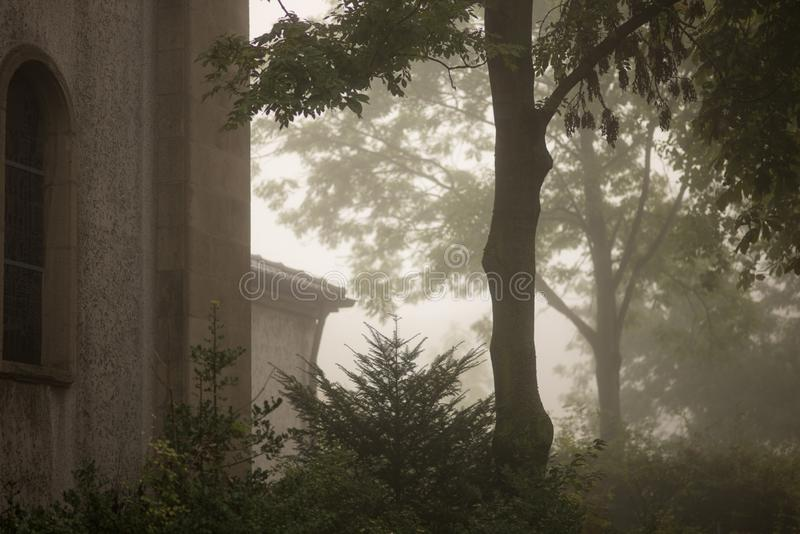 trees in the mist royalty free stock image