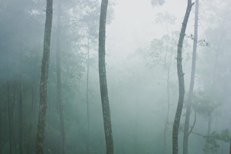 Trees and mist in forest. Misty forest near Malang, Indonesia royalty free stock photography