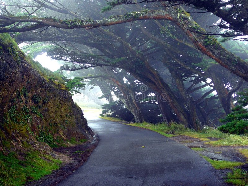 Download Trees Mist Lane stock image. Image of moss, mist, discover - 2001505