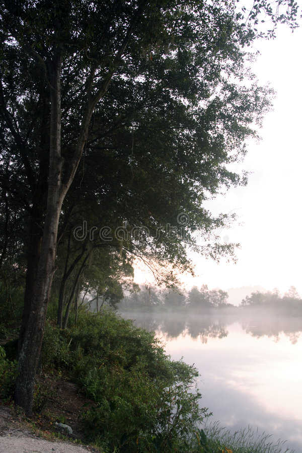 Trees on a misty shore during sunrise royalty free stock photography