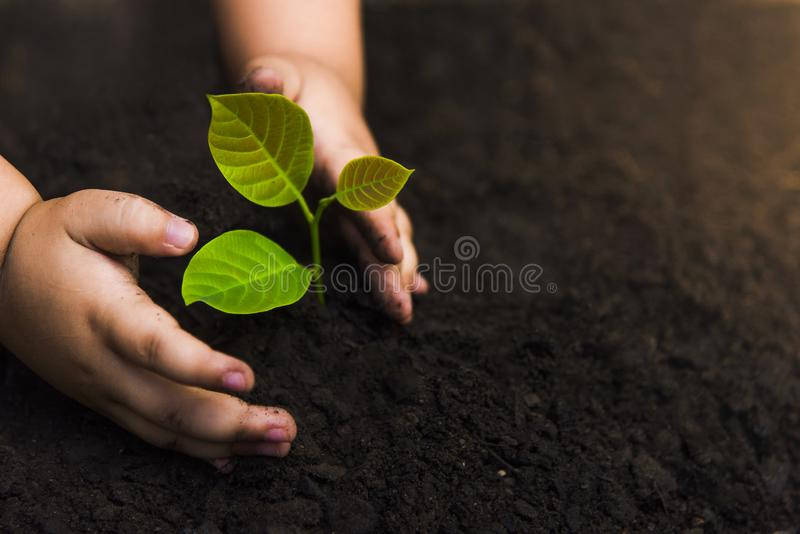 Trees with money, saving money and growing hands.Growth of money And environmental protection Tree care stock photo