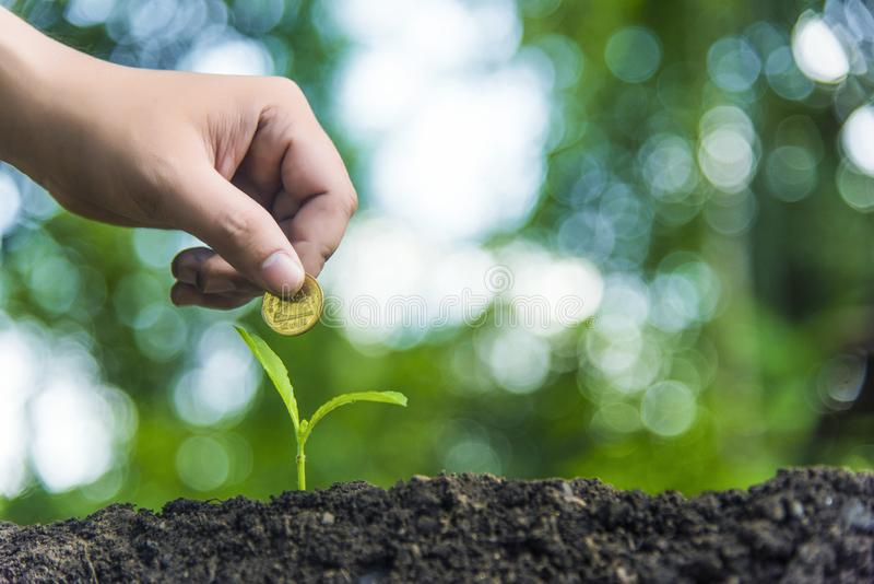 Trees with money, savings and money.Growth of money And environmental protection Tree care stock photography