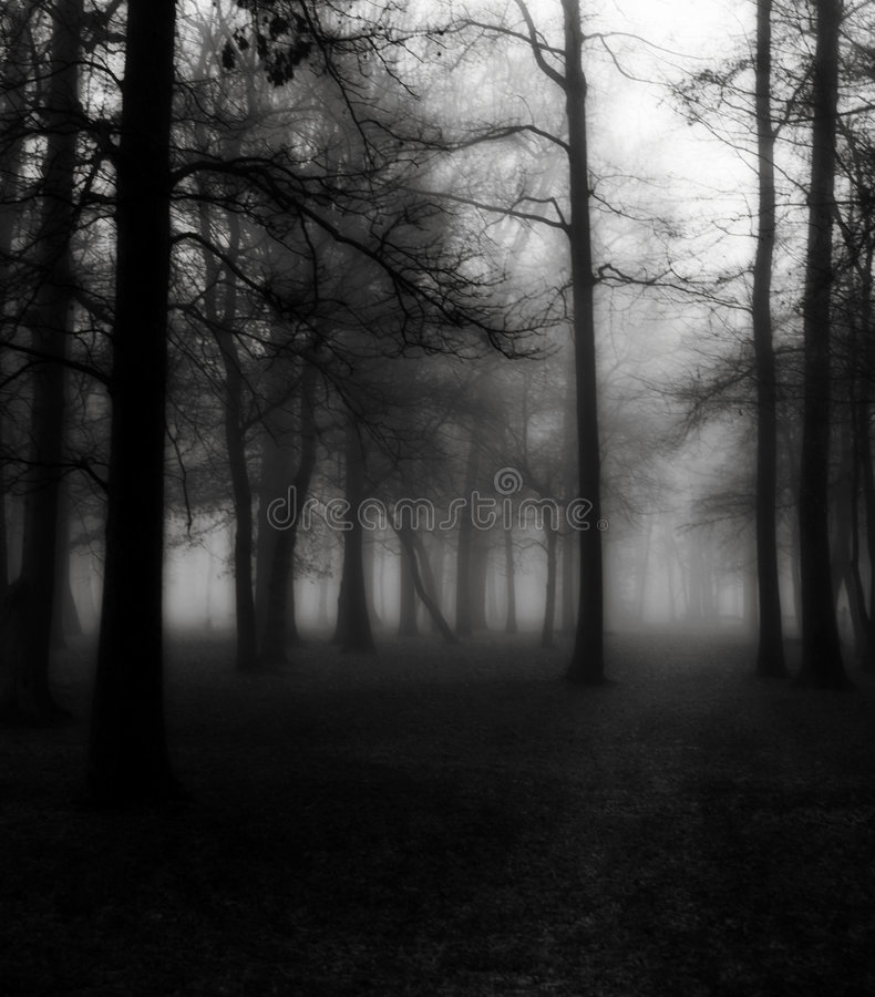 Download Trees in Morning Fog stock image. Image of tranquil, evergreen - 5741481