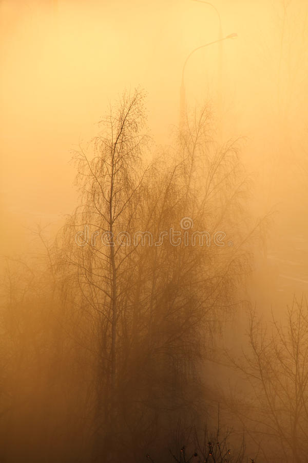 Download Trees in the Morning Fog stock photo. Image of mist, landscape - 35386816