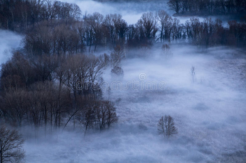 Trees in the morning mist royalty free stock photo