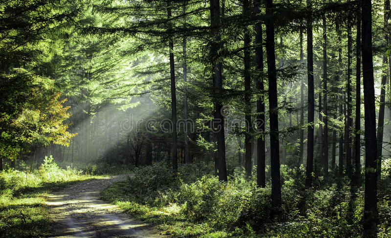 Download Trees in the morning sun stock image. Image of golden - 26990033