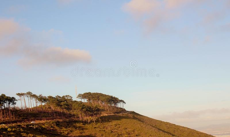 Trees on the mountain in Cape Town royalty free stock photo