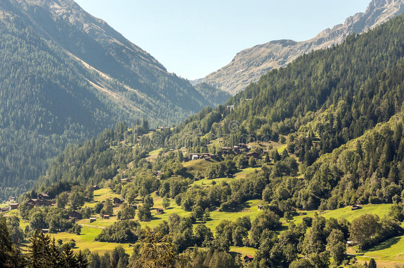 Alpine Landscape With Swiss Pine Trees And Mountain Peaks ...