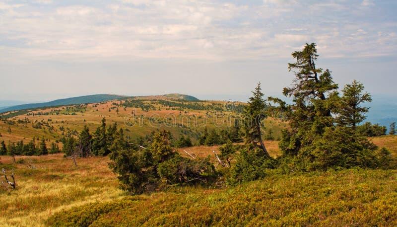 Trees on mountain ridge Vysoka Hole royalty free stock photo