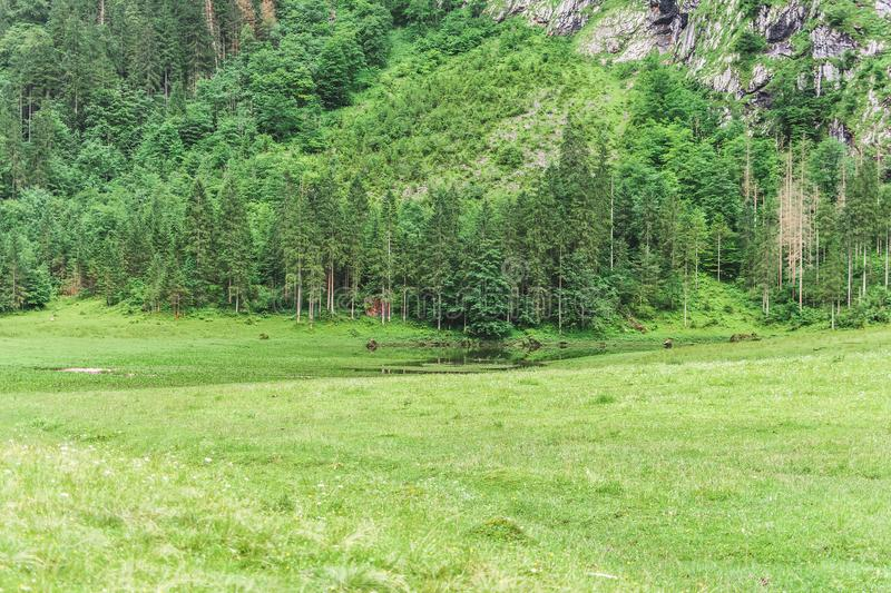 Trees in the mountains, Alps, Germany, Bershtesgaden Obersee. royalty free stock images