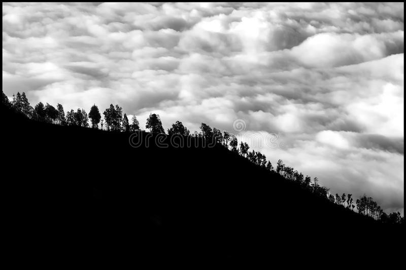 Trees on the mountainside against the background of storm clouds. Light and shadow. Black and white photo.  royalty free stock photos