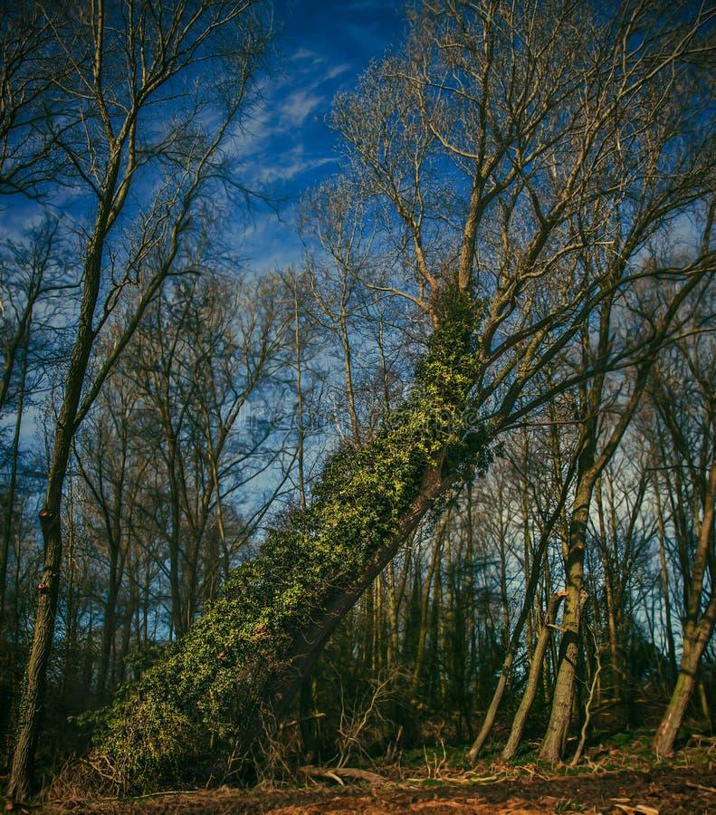 Download Trees Nära Tetney Blowbrunnar Fotografering för Bildbyråer - Bild av nationellt, floror: 27286719