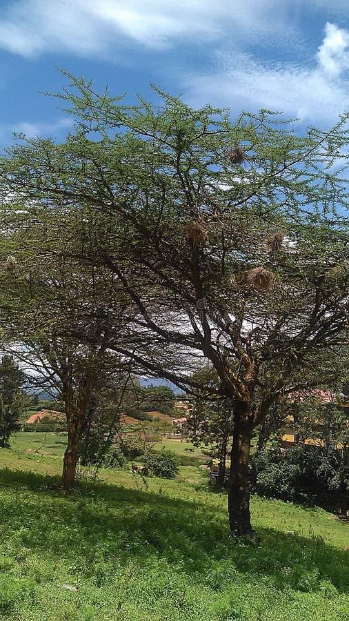 Trees nature landscape stock photo