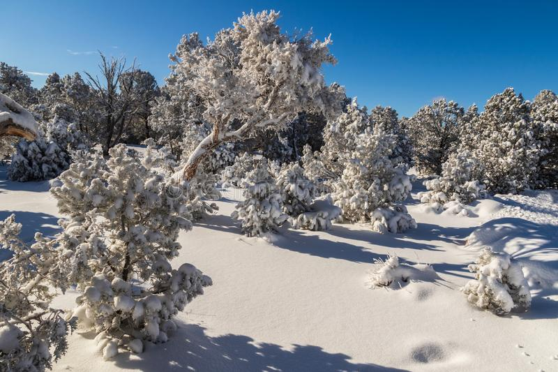 Trees covered with snow near Grand Canyon. Snow on ground; blue sky above. Trees near the Grand Canyon`s south rim, covered with snow Snow also carpets the royalty free stock photo