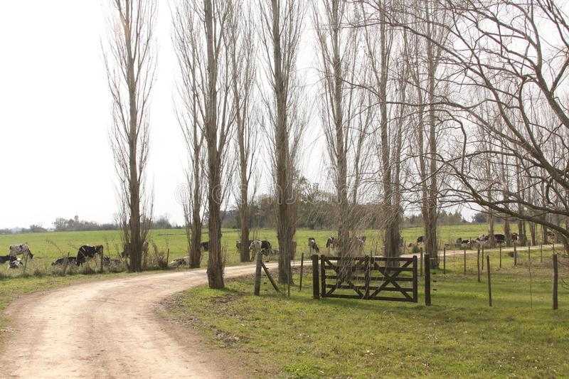 Farm trees and fence royalty free stock images
