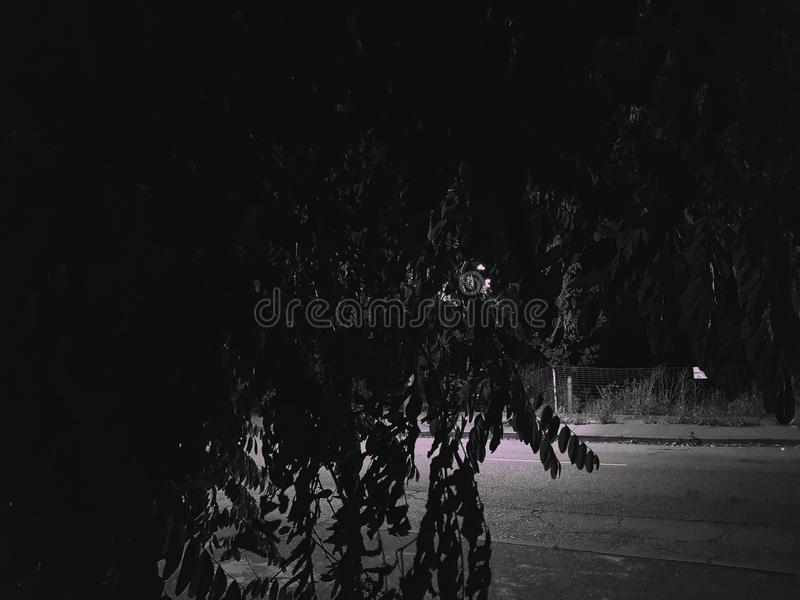 trees in the night royalty free stock photo