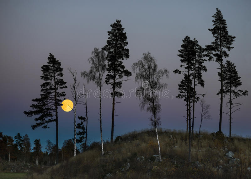 Trees at night with full moon stock photography