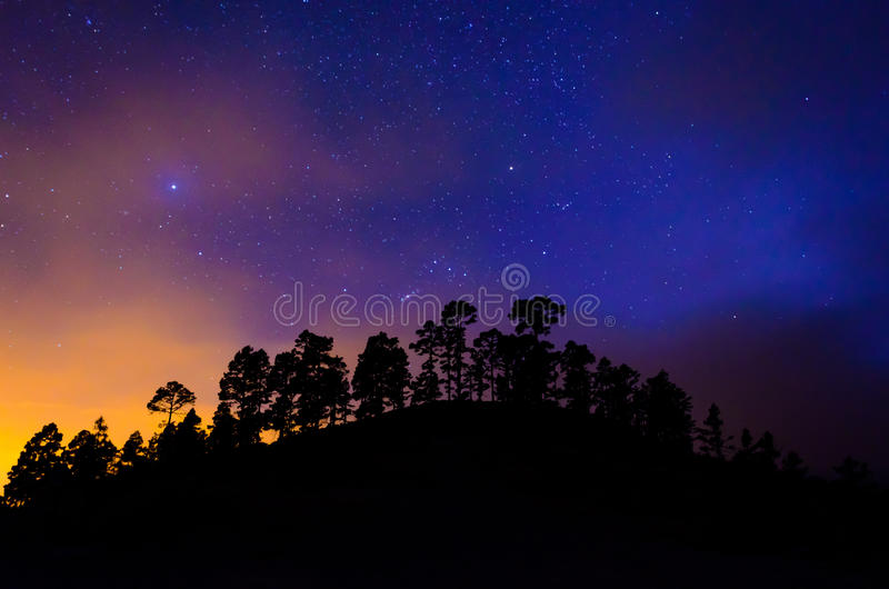 Trees in the night sky with stars. This picture shows the silhouettes of trees in the night sky with a lot of stars royalty free stock images