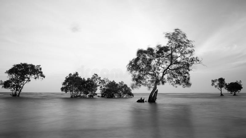 Trees and ocean in long exposure shot. Trees grow along a beach and when the tide rises, the bottom part of the trees are submerged in water. Image taken on an