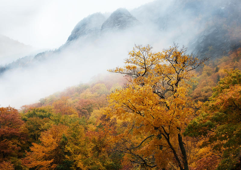 Trees och dimma i höst arkivfoton