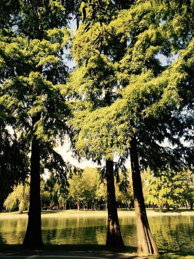 Trees och lake royaltyfri bild