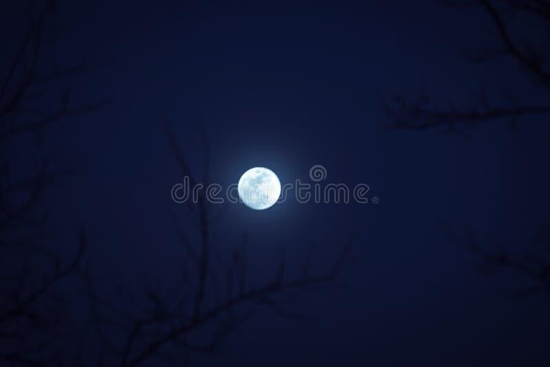 Trees och moon arkivfoton