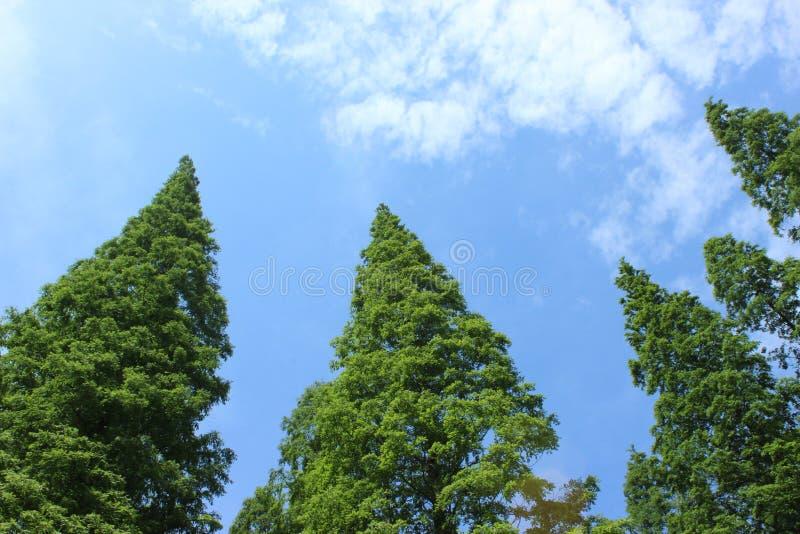 Trees och Sky arkivfoto