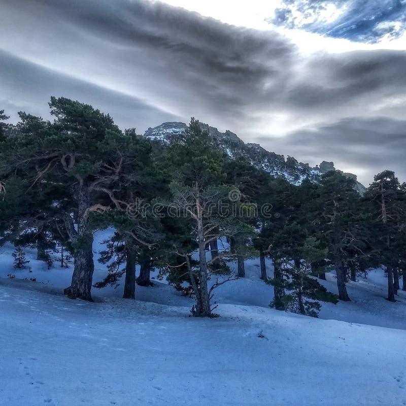 Trees och Snow arkivbild