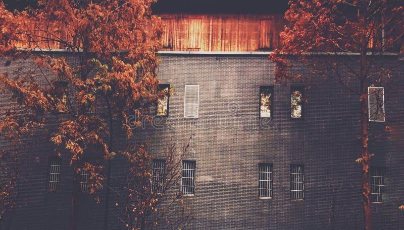 Trees och väggar fotografering för bildbyråer