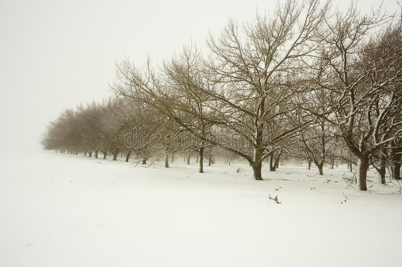 Trees in an orchard stock photography
