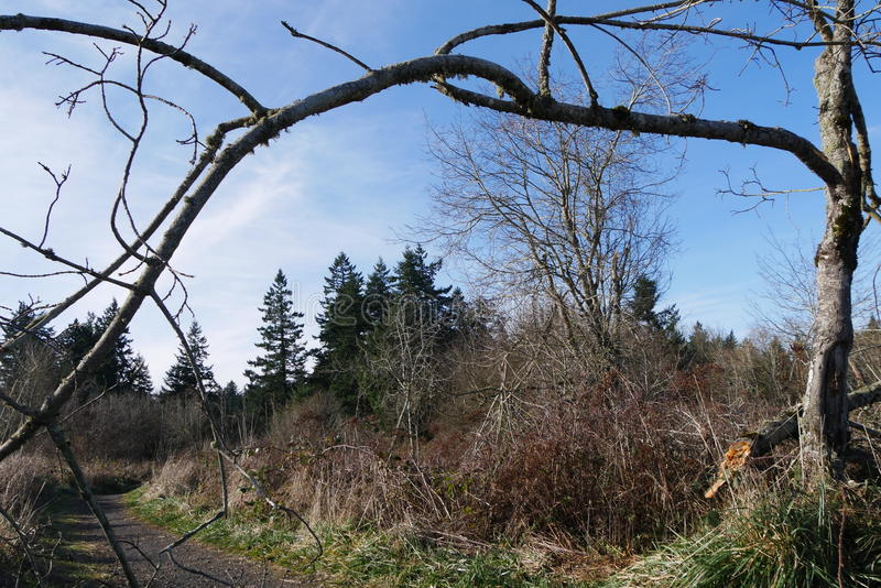 Download Trees In Oregon Stock Photo - Image: 83715704