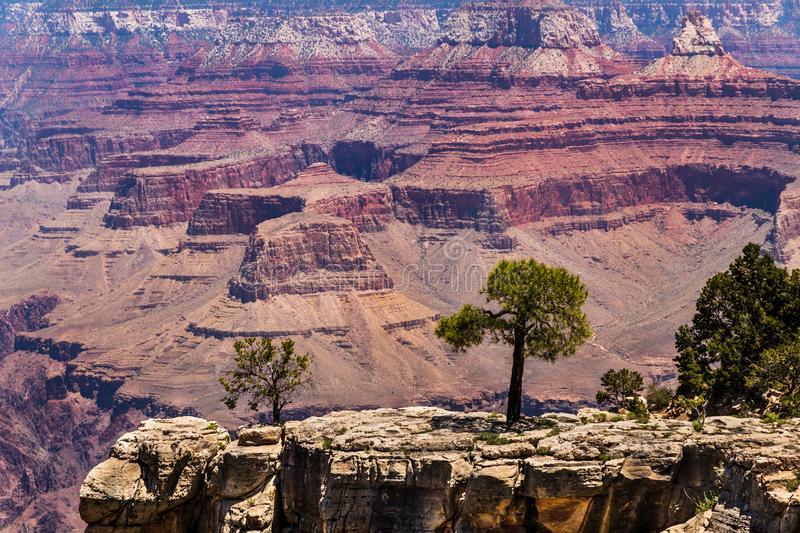 Trees on outcrop of Grand Canyon`s South Rim. Red formation of North wall in background. stock photography