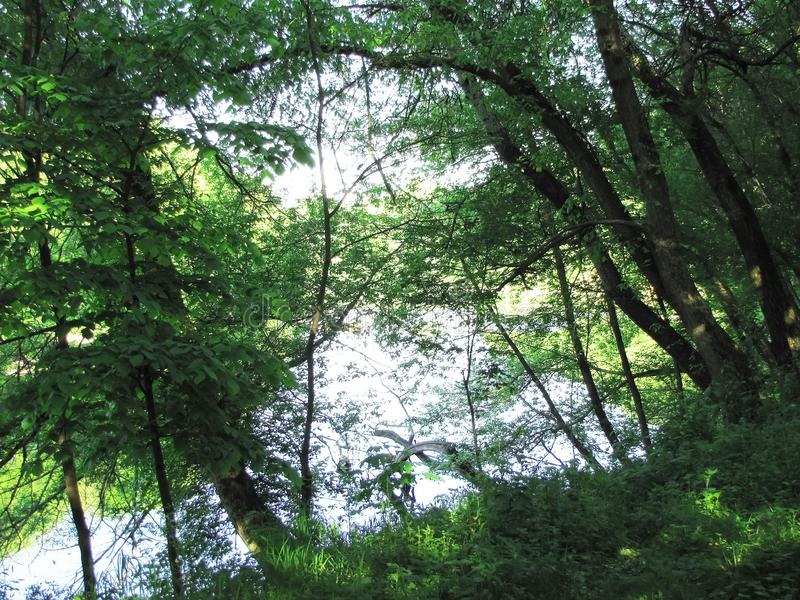 A forest fairy tale on the river bank stock images