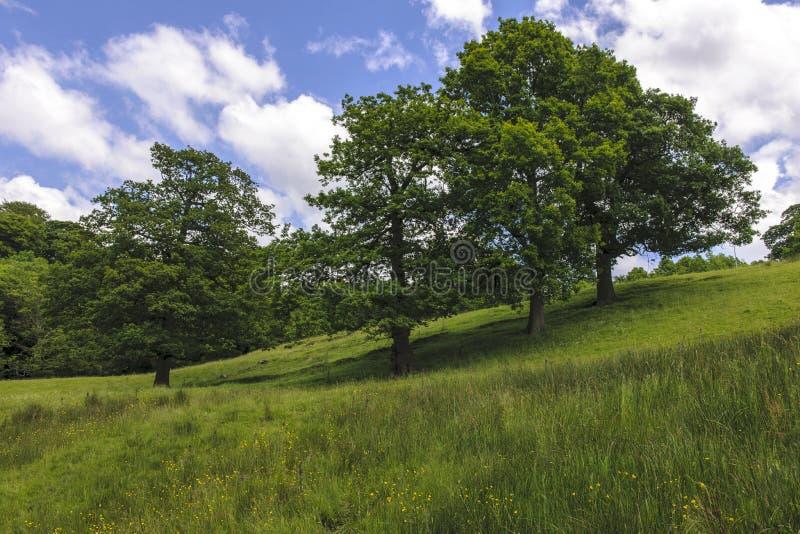 Trees på back royaltyfri bild