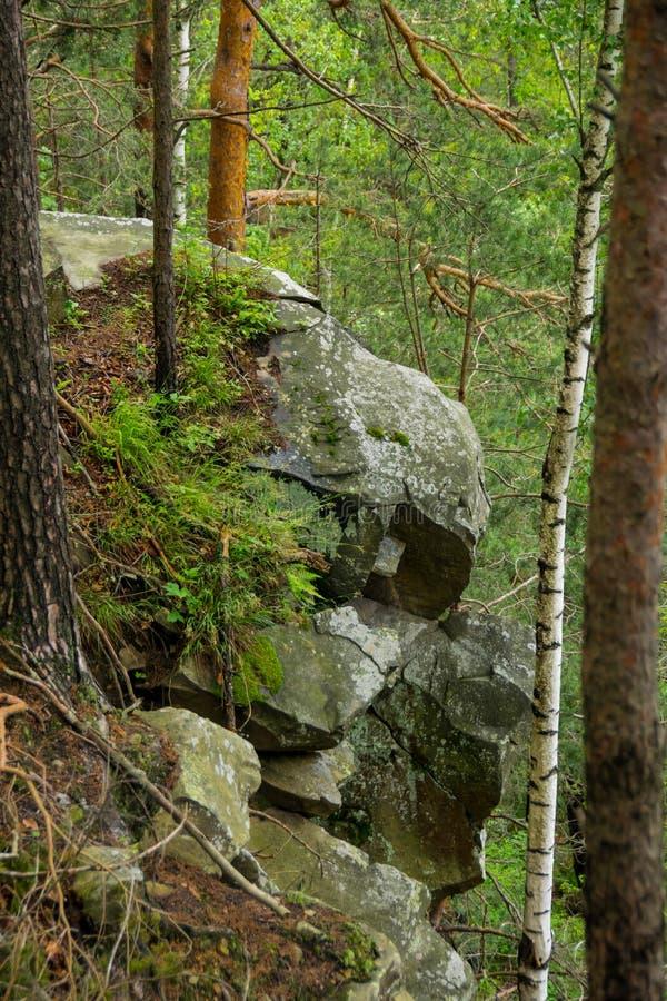 Trees p? klippan fotografering för bildbyråer