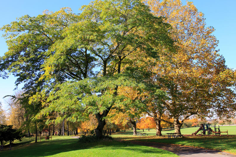 Download Trees In A Park. Stock Photos - Image: 16805933
