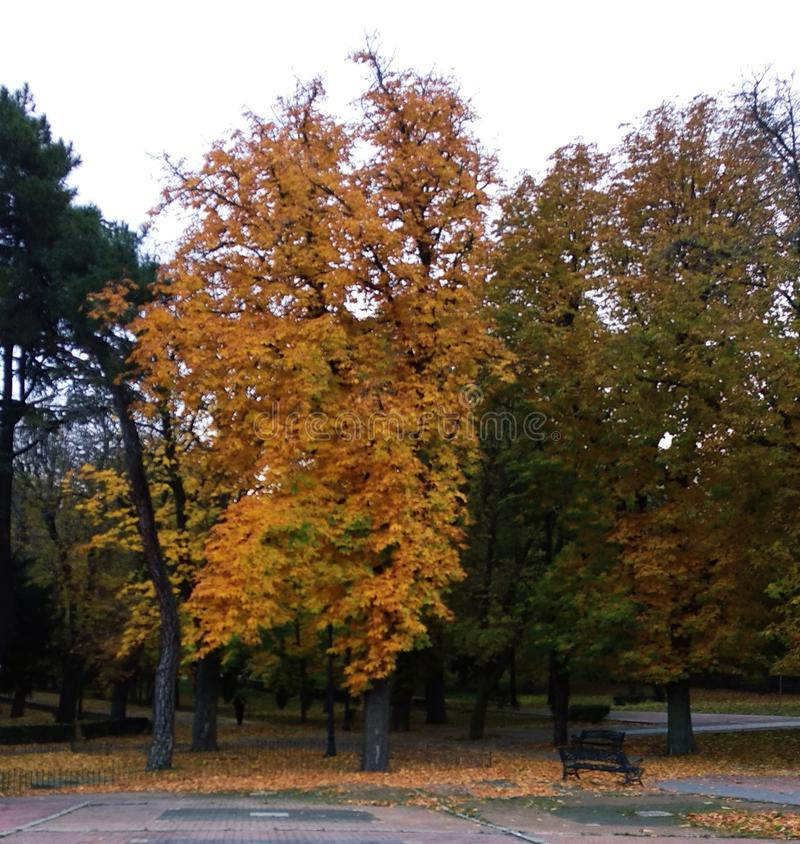 The trees of the park in autumn. Beautiful autumn landscape. The leaves of the trees begin to fall royalty free stock images